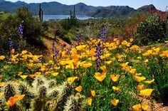 Bartlett Lake, near Phoenix, AZ. → For more, please visit me at: www.facebook.com/jolly.ollie.77