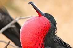 PHOTO GALLERY: The Beauty of Galapagos Birds