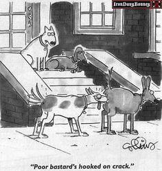 Funny dog cartoon from http://funny-dog.info