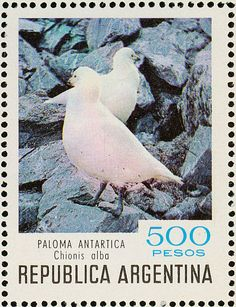 Snowy Sheathbill stamps - mainly images - gallery format