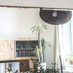 Co widać w lustrze...🌵🌿 #pachypodiumlamerei #plants #succulent #crassula #oldfurniture #mebkezodzysku #woodfurniture #oldfurniture #cabinet #kredens  #komoda #vintagestyle #vintagehomedecor #vintagehome #interior #interiordesign #wood #drewno #vintagedesign #starocie #wystrojwnetrz #vintage #lampa #lamp #lustro #mirror #oldwood #wilczomlecz