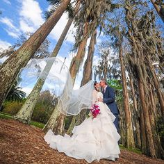 Love the old Cypress Tree's that adorn the property at the Historic Cypress Grove Estates.  Makes for a lovely backdrop for an outside wedding. #CypressGroveEstateHouse #wedding  #bride  #groom  #cypresstrees #inlove #dip #veil