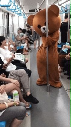 No, Put your hand on my lap – Gif Funny Funny Videos, Funny Video Memes, Funny Shit, Funny Cute, Best Street Fights, Arrogant Cat, Teach Dog Tricks, Roblox Memes, Embarrassing Moments