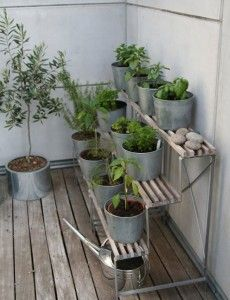 Potted Herb Garden #outdoor #decorating