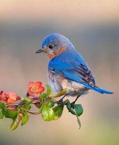 Pretty Birds, Beautiful Birds, Animals Beautiful, Cute Animals, Small Birds, Colorful Birds, Loro Animal, Bird Pictures, Wild Birds