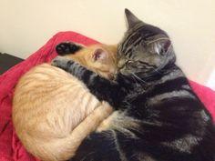 Brothers cuddling