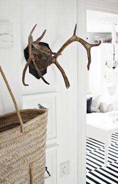 mooi ook in de herfst en kerstperiode: gewei aan de muur! Kijk voor grotere en kleinere geweien bij www. Door Syl