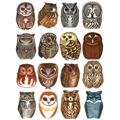 owls   Tumblr ❤ liked on Polyvore featuring art, backgrounds, filler, animals and owls