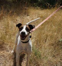 Adopta a Chakra ( Mestizo ) - #adopta #perros