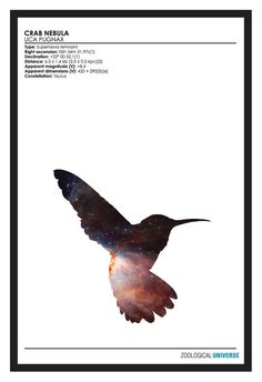 Cosmic Humming Bird, Minimalist Space Phenomena Print // Zoological Universe Poster Series // Space and Astronomy Silhouette Print