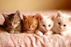 Cute kittens in a row. Cute Kittens, Cute Kitten Gif, Kittens And Puppies, Cats And Kittens, Kittens Meowing, Raising Kittens, Kitten Pics, Small Kittens, Ragdoll Kittens