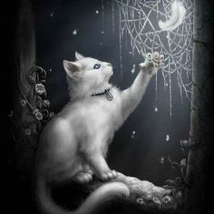 White cat with web ✿ ☂. I Love Cats, Crazy Cats, Cool Cats, Witch Cat, Photo Chat, Here Kitty Kitty, Halloween Cat, Halloween Ideas, Cat Drawing