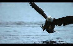 """""""Mas os que esperam no Senhor renovarão as forças, subirão com asas como águias; correrão, e não se cansarão; caminharão, e não se fatigarão."""" [Isaías.40:31]"""