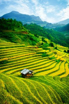 Mu Cang Chai, Yen Bai, #Vietnam. Vktour.com