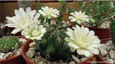 cactus-y-suculentas-tarjetas-imprimibles2