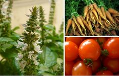 Grow Easy: 15 Foolproof Plants for Organic Gardens