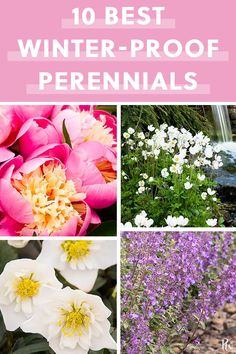 The 10 Best Winter-Proof Perennials - Gardening Winter Plants, Winter Flowers, Winter Garden, Summer Flowers, Hardy Perennials, Flowers Perennials, Planting Flowers, Flowers Garden, Zone 4 Perennials