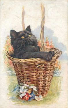 black cat in wicker basket looks up, flowers in front