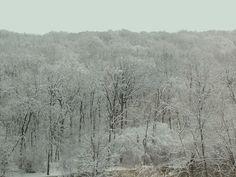 Snow Trees Chicago