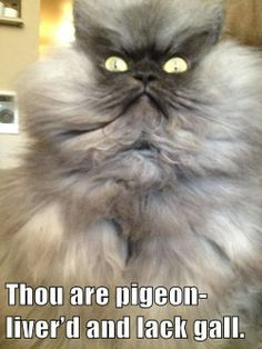 1000+ images about Shakespeare Insults on Pinterest | Shakespeare ...  Animal Shakespeare Memes