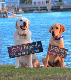 eek love it! i was just telling the hubby I want a puppy next xmas so it's old enough to protect the babies once they start coming .. Baby announcement with dogs