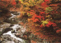 磐梯吾妻レークラインにある、「中津川渓谷」紅葉の時期にはたくさんの観光客の方がいらっしゃいます。