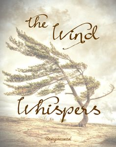 """The Wind Whispers...""""Every word has its consequences. Every silence too."""" - Jean-Paul Sartre"""