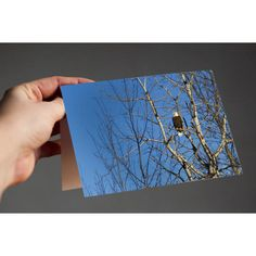 Aitkin Eagle  A classic bird for a classic card.  Available in multiple pack amounts, this card is 4x5.5, printed on archival, fine art Art Matte cardstock, very soft and smooth; a true experience to open. Each card is blank on the inside, and comes with white envelopes. A standard stamp will work to mail for this size card in the USA.  Make sure to explore my shop - I have many cards available, perfect for all occasions. Think outside the box for your next event! Birthdays, weddings, baby…