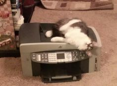 Nooooo, do not through this old printer awaaayyyy, i am trying to fix it.. see!...