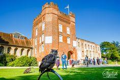 Owl at Farnham Castle Wedding Castle Weddings, Surrey, Hampshire, Wedding Photos, Owl, Louvre, Wedding Photography, Nature, Travel