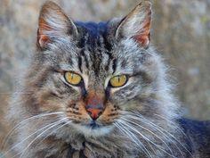 https://flic.kr/p/DVnoaT   Questione di feeling...   Adoro i gatti e mi piace tanto fargli le foto: penso che loro gradiscano posare per me: mi fissano negli occhi e aspettano il mio scatto:-))))!! ps: il gatto non è mio, è un randagio della colonia felina di Porto Conte: porto sempre qualcosa da mangiare..