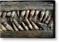 close-up-of-ichthyosaur-snout.