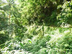 Canal de Beauregard ou des Esclaves, Martinique. Déconseillé à tous ceux qui ont le vertige!