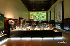 Museum of Man exhibition design by claudia mihalache, via Behance http://evolve-media.ro