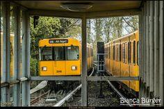 U6 U-Bahn-Tour 5 U-Bahnhof Scharnweberstraße  #berlin #deutschland #germany #station #ubahn #ubahnhof #bahnhof #publictransport #igersgermany #igersberlin #shootcamp #visit_berlin #biancabuergerphotography #diestadtberlin #berlingram #canondeutschland #canon #5Diii #EOS5DMarkIII #ig_deutschland #ig_berlin #U6 #weilwirdichlieben #pickmotion #underground #metro #underground_enthusiasts #diewocheaufinstagram