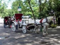 central park horse and carriage - Google Search