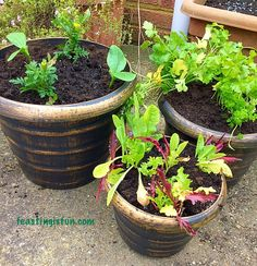 Wilko Gardening Product Review - a look at planters and container growing vegetables, herbs and flowers. How to prepare the pots for the best harvest. Savoury Baking, Fresh Bread, Product Review, Growing Vegetables, Gardening Tips, Harvest, Pots, Garden Ideas, Things To Do