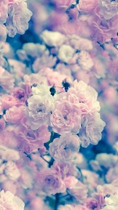 Find images and videos about pink, flowers and wallpaper on We Heart It - the app to get lost in what you love. Cute Patterns Wallpaper, Cute Wallpaper Backgrounds, Wallpaper Iphone Cute, Nature Wallpaper, Pink Wallpaper Girly, Flower Phone Wallpaper, Aesthetic Pastel Wallpaper, Beautiful Landscape Wallpaper, Beautiful Flowers Wallpapers