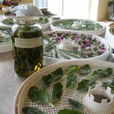 Herbs and Wildcrafting: How to Infuse Herbs in Oil, Water, Vinegar, Alcohol or Honey