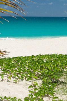 Tropical island beach... byocb ( bring your own cabana boy )