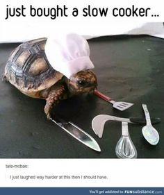 Animal Jokes, Funny Animal Memes, Funny Animal Pictures, Cute Funny Animals, Cute Baby Animals, Funny Cute, Really Funny, Clean Animal Memes, Funny Looking Animals