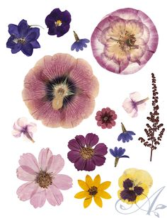pressed flowers for digital collage
