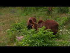 Немски филм показва природата на България. Ще я видите, както никога досега! | Чуждоземец