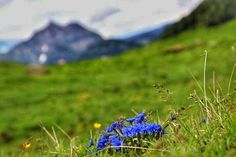 Berg, Mountains, Nature, Travel, Voyage, Viajes, Traveling, The Great Outdoors, Trips