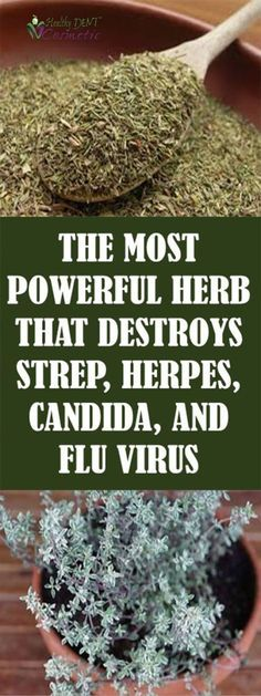 THE MOST POWERFUL HERB THAT DESTROYS STREP, HERPES, CANDIDA AND FLU VIRUS!
