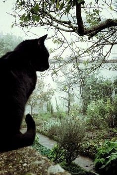 #blackcat