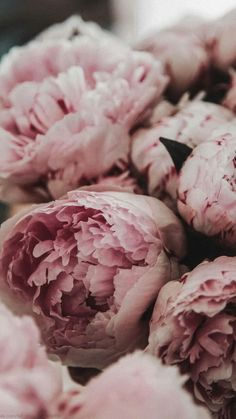 Peonies Wallpaper, Flower Phone Wallpaper, Iphone Wallpaper, Pink Flowers, Beautiful Flowers, Peony Flower, Peony Drawing, Peony Illustration, Peonies Centerpiece