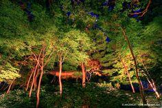 Garden by de lo, via Behance