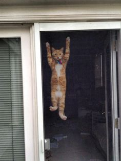 cute-overload:  My cat thinks he's a monkey…http://cute-overload.tumblr.com