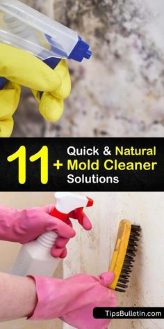 Protect your home from mildew and other natural molds by making homemade cleaning products. These DIY sprays contain hydrogen peroxide, tea tree oil, and white vinegar that work as natural… More